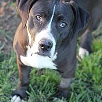 Adopt A Pet :: Petunia - Westport, CT