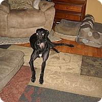 Adopt A Pet :: Al's Tail Kicker - Knoxville, TN