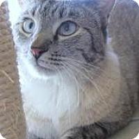 Adopt A Pet :: Ghost - Prescott, AZ