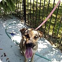 Adopt A Pet :: Trooper - Houston, TX