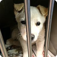 Adopt A Pet :: Sue - Westminster, CO