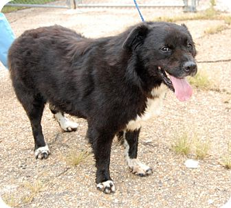 Border Collie Mix Dog for adoption in Jackson, Mississippi - Burlington