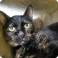 Adopt A Pet :: Geneva - Chicago, IL