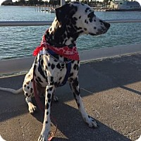 Adopt A Pet :: Dakota - Tampa, FL