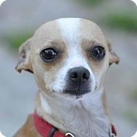 Adopt A Pet :: Mr. Tot - Ormond Beach, FL