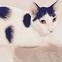 Adopt A Pet :: Mark - Houston, TX
