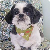 Adopt A Pet :: Grayson - Lawrenceville, GA