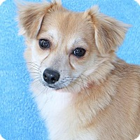 Adopt A Pet :: Roadrunner - Encinitas, CA