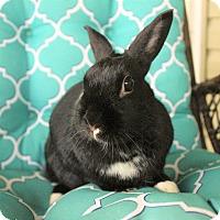 Adopt A Pet :: Fluffy - Hillside, NJ