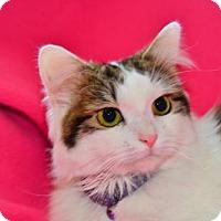 Adopt A Pet :: Millie - Buford, GA