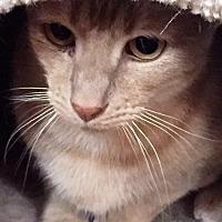 Adopt A Pet :: Simon - Piscataway, NJ