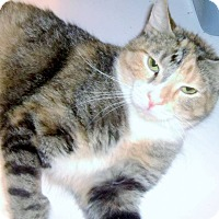 Adopt A Pet :: Precious - Muscatine, IA