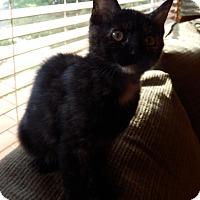 Adopt A Pet :: Fannie - Naperville, IL