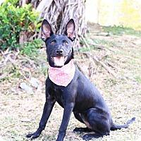 Adopt A Pet :: Reka - San Mateo, CA