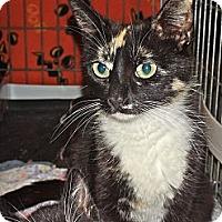 Adopt A Pet :: Cherie - Escondido, CA