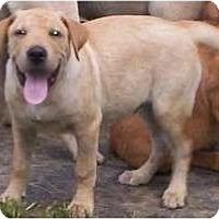 Adopt A Pet :: Dakota - Brewster, NY