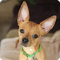 Adopt A Pet :: Johnny - click to see story! - Los Angeles, CA