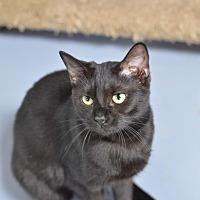 Adopt A Pet :: Fiddle 14305 - Atlanta, GA