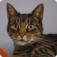 Adopt A Pet :: Joey - Winchendon, MA