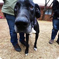 Adopt A Pet :: Zoe - Lubbock, TX