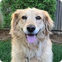 Adopt A Pet :: Sadie (Toni Tennille) - Brownsboro, AL