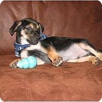 Adopt A Pet :: PRESLEY - Bryan, TX