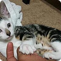 Adopt A Pet :: Carly - Chandler, AZ