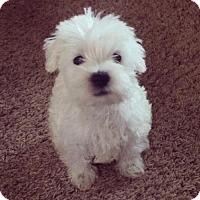 Adopt A Pet :: Brek - Sacramento, CA