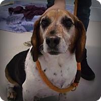 Adopt A Pet :: Bullet - Muskegon, MI