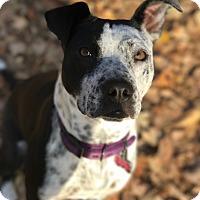 Adopt A Pet :: Maxine - Florence, KY