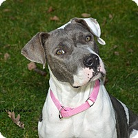 Adopt A Pet :: Jasmine Foster Home Needed - Woodbury, NJ