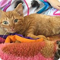 Adopt A Pet :: Adela - Cambridge, ON