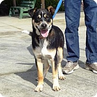 Adopt A Pet :: Chase - Lathrop, CA