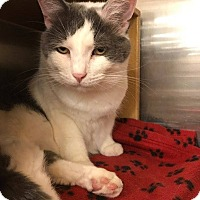 Adopt A Pet :: HECTOR - Northfield, OH