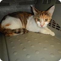 Adopt A Pet :: Emma - Kalamazoo, MI