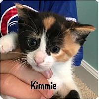 Adopt A Pet :: Kimmie - kitten - Herndon, VA