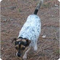 Adopt A Pet :: Lil Bit - Snellville, GA