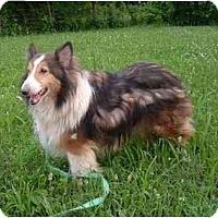 Adopt A Pet :: Broc - Indiana, IN