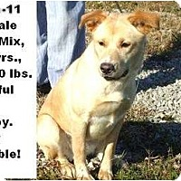 Adopt A Pet :: # 591-11 @ Animal Shelter - Zanesville, OH