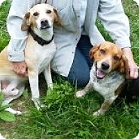 Adopt A Pet :: Tailpipe - Indianapolis, IN