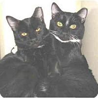 Adopt A Pet :: Whiskers - Mesa, AZ