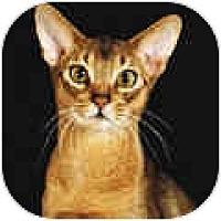 Adopt A Pet :: Natasha - San Ramon, CA