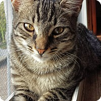 Adopt A Pet :: Mitchell (JT) - Little Falls, NJ