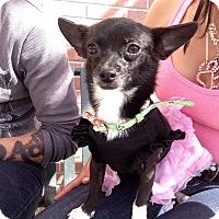 Adopt A Pet :: Katelyn - Fowler, CA