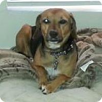 Adopt A Pet :: Tuffy - Phoenix, AZ