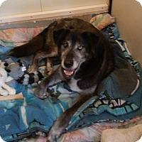 Adopt A Pet :: Goober - Franklin, NH