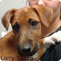 Adopt A Pet :: Larry - baltimore, MD