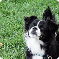Adopt A Pet :: Pandora - Meridian, ID