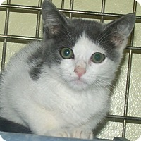 Adopt A Pet :: JAY - Acme, PA