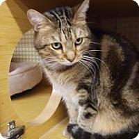Adopt A Pet :: Twinkie - Tucson, AZ